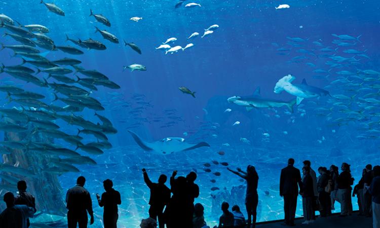 Nausicaá aquarium opal coast france